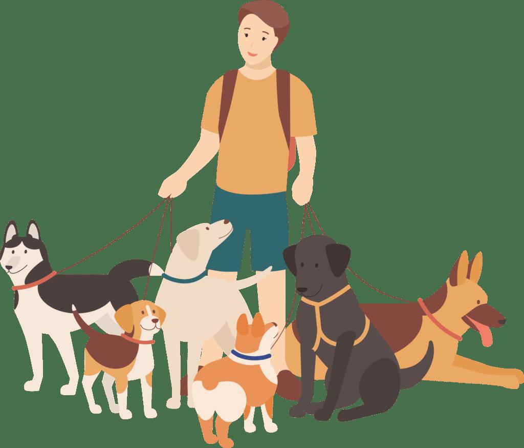 Image: man walking 6 dogs