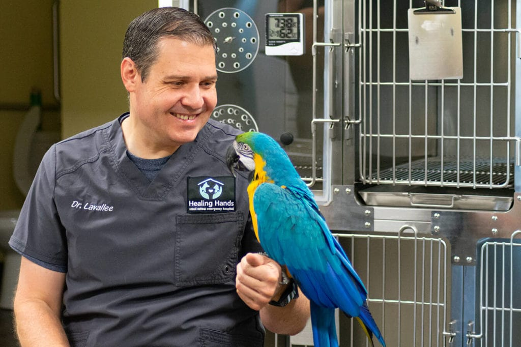 Image: Dr. Lavallee with a Parrot